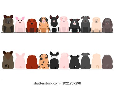 various breeds of pigs front and back border set