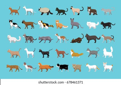 Various Cats Side View Cartoon Vector Illustration