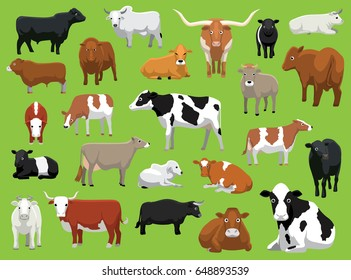 Various Cow Bull Cattle Poses Vector Illustration