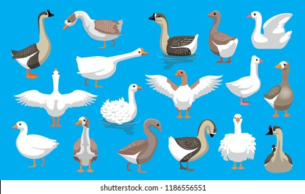 Various Cute Geese Breeds Cartoon Vector Characters