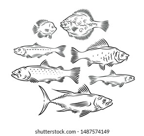 Various fish set. Seafood, fishing sketch vector illustration
