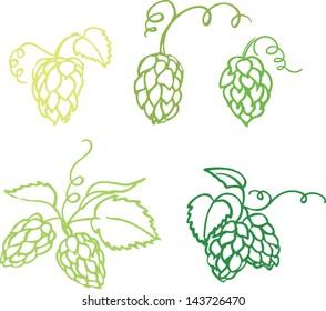 Various hops vector illustration