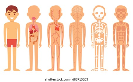 Various illustration systems of a human body diagram on a white isolated background. Vector illustration.