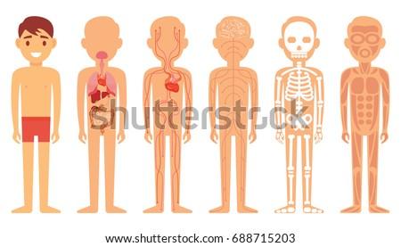 Various Illustration Systems Human Body Diagram Stock Vector ...