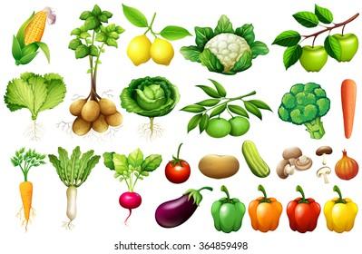 vegetable clipart images stock photos vectors shutterstock rh shutterstock com vegetables clipart k12 vegetables clip art free download