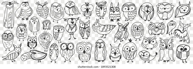 Various owls birds doodle set