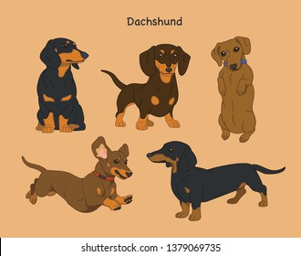 Various poses of dachshunds. hand drawn style vector design illustrations.