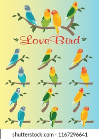 Various positions an colors of lovebird. Lovebird colorful. Cute Lovebird. Colorful lovebird on twigs and leaves.