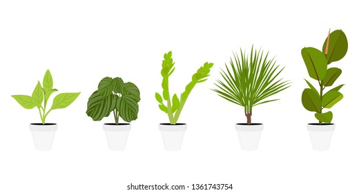 Various potted houseplants. Garden potted plants. Vector set potted plants. Flowerpot bloom