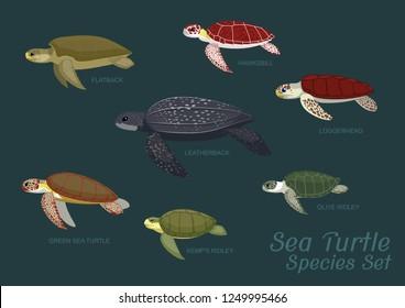 Various Sea Turtle Species Set Cartoon Vector Illustration