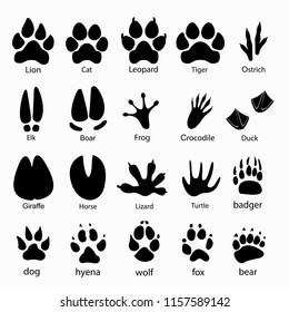 Various traces of cloven-hoofed animals. Boar, giraffe, horse, elk paws Leopard, lion, tiger paws Frog, lizard, crocodile, paw turtle duck wolf fox bear hyena dog ostrich badger