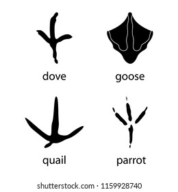 Various traces of poultry. Goose, dove, parrot, quail vector design