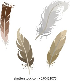 Various types of feathers