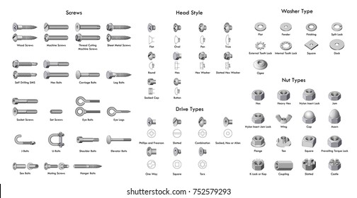 Various types of screws and bolts. Set of screws, bolts, nuts and rivets. Isolated vector elements.