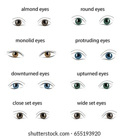 Various types of woman eyes on white background. Set of different vector eye shapes. Collection of illustrations with captions. Makeup type info graphic.