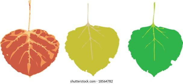 Various vector seasonal colored aspen leaves