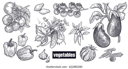 Various vegetables set. Tomatoes, cucumbers, eggplants, peppers, cayenne pepper, garlic, okra, cherry tomatoes. Hand drawing sketch. Black and white. Vector illustration art. Vintage engraving.