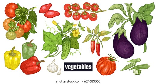 Various vegetables set. Tomatoes, cucumbers, eggplants, peppers, cayenne pepper, garlic, okra, cherry tomatoes. Hand drawing sketch. Red, green and white. Vector illustration art. Vintage engraving.