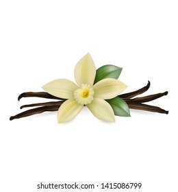 Vector 3d Realistic Composition with Sweet Scented Fresh Vanilla Flower with Dried Seed Pods and Leaves Set Closeup Isolated on White Background. Distinctive Flavoring, Culinary Concept. Design