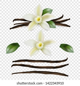 Vector 3d Realistic Sweet Scented Fresh Vanilla Flower with Dried Seed Pods and Leaves Set Closeup Isolated on Transparent Background. Distinctive Flavoring, Culinary Concept. Front View
