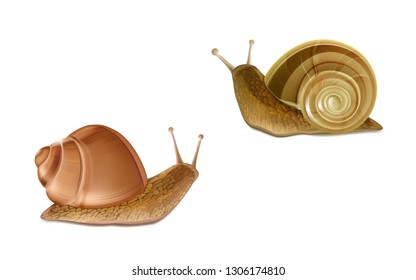 Vector 3d realistic two creeping Burgundy or Roman snails. French cuisine delicatessen, edible and farming European specie snail, skincare cosmetics ingredient. Gastropods isolated on white background