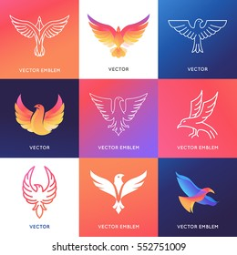 Vector abstract logo design templates in bright gradient colors - phoenix bird and eagle emblems