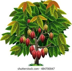 Vector abstrak, cocoa tree