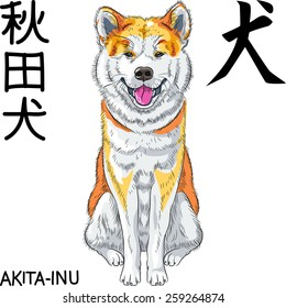 Vector Akita Inu Japanese Dog sits and smiles and inscription Japanese hieroglyph of words Dog and Akita Inu