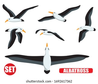 Vector of albatross set with white background.