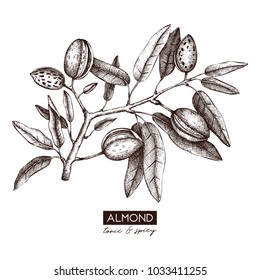 Vector Almond illustration. Hand drawn  nut tree sketch. Botanical design template. Vintage tonic plant drawing