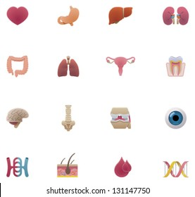 Vector anatomy and human organs icon set. Includes symbols of heart, stomach, kidneys, liver, blood vessels, bones with joint, spine and brain