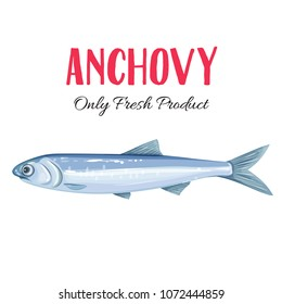 Vector anchovy. Icon badge fish for design seafood packaging and market.