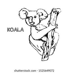 vector animal australia koala isolated 260nw