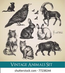 Vector animals set - raven, cats, flying birds, rabbits, boar, goat