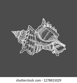 Vector antique engraving illustration of spiral seashell isolated on black background