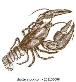 Vector antique engraving woodcut illustration of one crayfish on white background