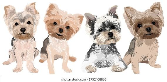 Vector art of adorable 4 puppies yorkshire terrier dog
