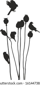 vector art small birds on a matured poppy heads