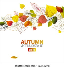 Vector Autumn abstract floral background with place for your text