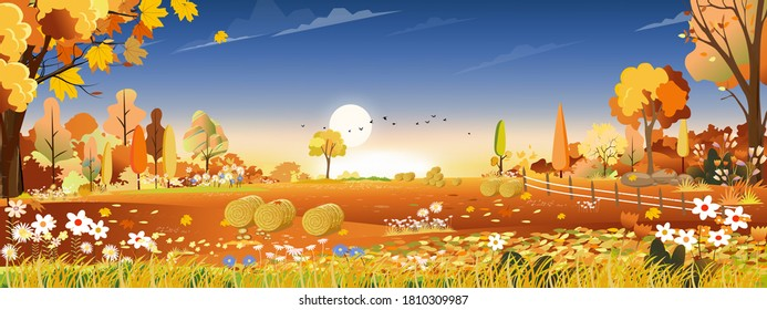 Vector Autumn landscape at harvest farm field with orange and blue sky,Beautiful sunset in mid Autumn in countryside,Panorama view with yellow and orange foliage, Banner background for Fall season