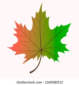 Vector autumn maple leaf vector on a light red background