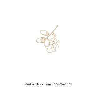 Vector autumn oak leaves and acorns. Isolated, in line art style on white background. Outline, linear vintage drawing botanical  illustration. Autumnal leaves, elements for design templates.