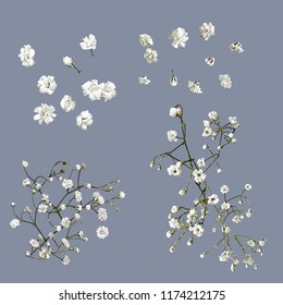 Vector Baby's Breath Flowers