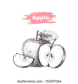Vector background with apples . Hand drawn. Vintage style
