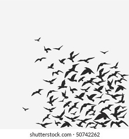 Vector background of a birds' flock