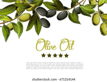 Vector background with border of black and green olives.