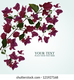 Vector background with bougainvillea
