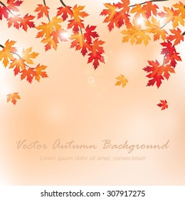 vector background with branches of maple tree