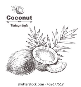 Vector background with  coconut . Hand drawn. Vintage style
