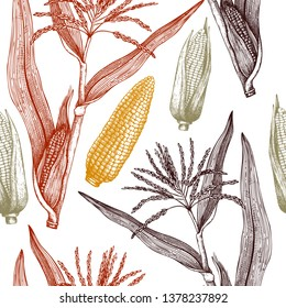 Vector background with corn illustration. Hand drawn maize sketch. Botanical seamless pattern with vintage cereal plants drawing. Healthy food design.
